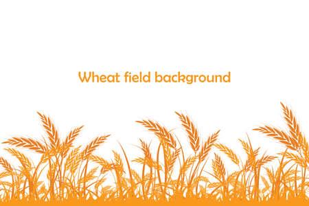 Silueta de vector de trigo. Trigo en el campo sobre un fondo blanco. Ilustración de vector