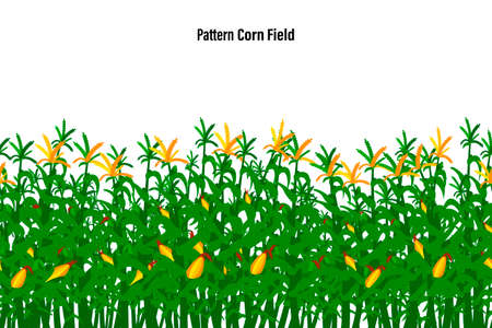 Field of corn on a white background isolated. Pattern Vector illustration.