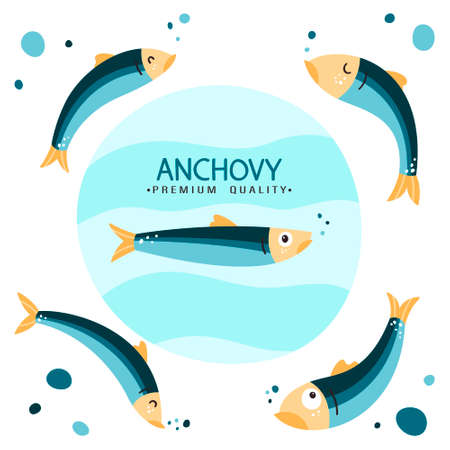Anchovy fish vector illustration. Small salted fodder fish of the Engraulidae family. Peruvian anchovy. Tasty food. Seafood healthy diet. California anchovy. 向量圖像