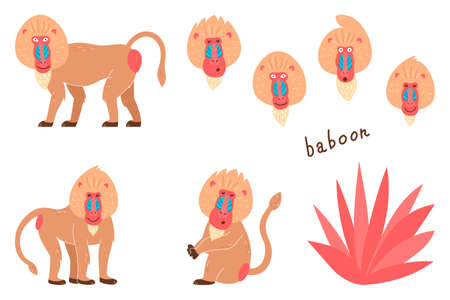 Set of baboons in a cartoon style. Childrens pictures with animals. Cartoon illustration of a baboon vector icon on a white isolated background 向量圖像