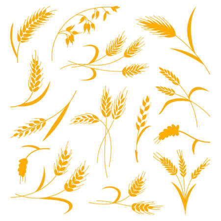 Set of spikelets of wheat on a white isolated background. Vector illustration. The icon 矢量图像