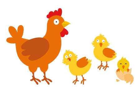 Mother hen with chicks. Hen and chickens. Vector illustration isolated on white background Ilustrace