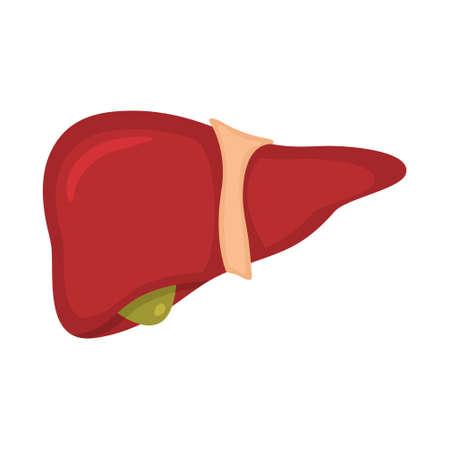 Human liver anatomy. Vector illustration of medical science. Internal organ. Education illustration. Vettoriali