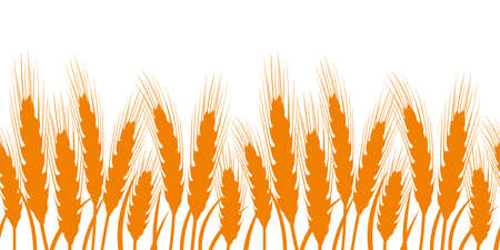Seamless background with ears of wheat. Vector illustration.