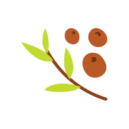 Allspice or pepper seeds. Pepper on a green branch. Unripe and ripe. Black pepper. Vector illustration.