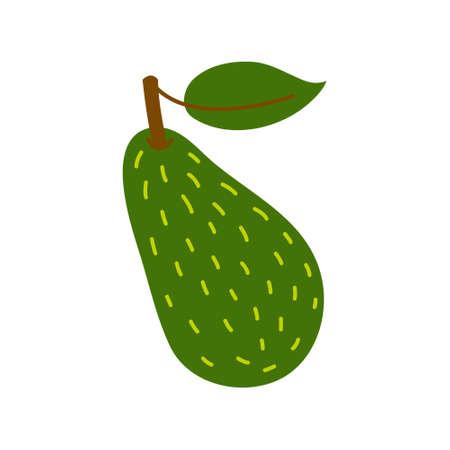 Avocado icon. Flat illustration of avocado vector icon isolated on white background.