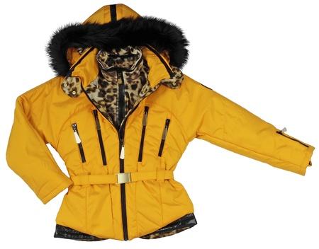 yellow jacket photo