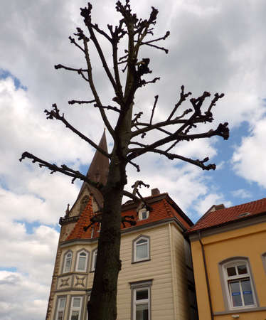 Young tree in front of old houses Standard-Bild