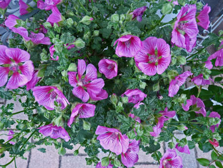 Kleine Lila Blumen Lizenzfreie Bilder