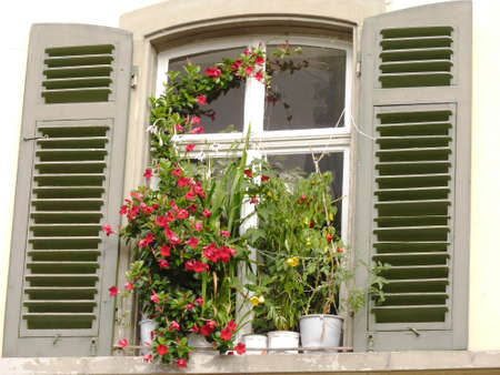 Flower pots in front of an old window