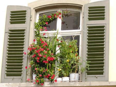 Blumentöpfe vor einem alten Fenster