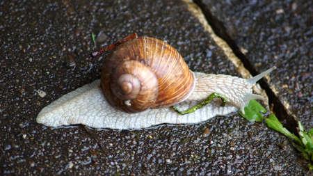 Snail at breakfast Standard-Bild