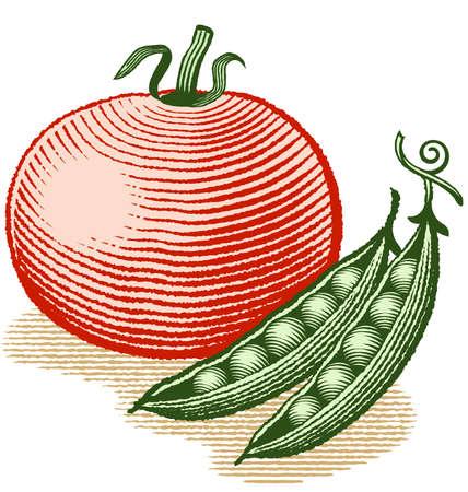 토마토의 목 판화 스타일과 두 개의 완두콩 포드의 벡터 일러스트 레이 션