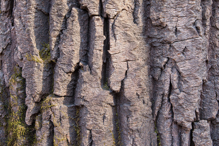 Bark of an old tree in the park as texture. Banco de Imagens