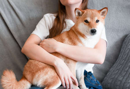 A woman hugs a cute red dog Shiba Inu, sitting on her lap at home. Close-up. Trust, calm, care, friendship, love concept.
