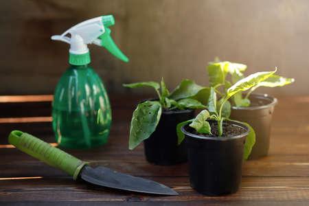Pots with pepper seedlings, garden shovel and sprayer on a wooden table. Preparing for landing