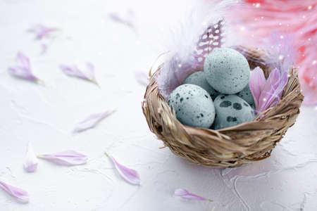 Blue Easter eggs in the small nest with feathers and flower petals on a light background. Painted quail eggs. Copy space. The Easter concept. Happy Easter 스톡 콘텐츠
