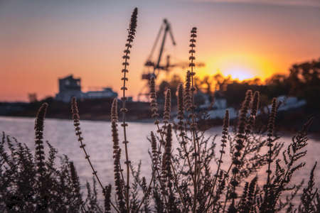 Sunset sky through dry grass on the river 스톡 콘텐츠