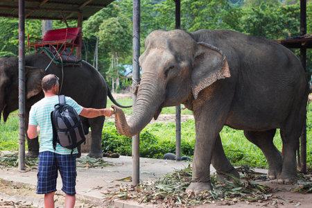 Man feeds elephant on elephant farm in Thailand