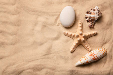 Shells and starfish on the sand. Top view. Copy space. Macro.