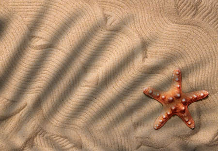 A starfish on the sand in the shade of palm leaves. Top view. Copy space 스톡 콘텐츠