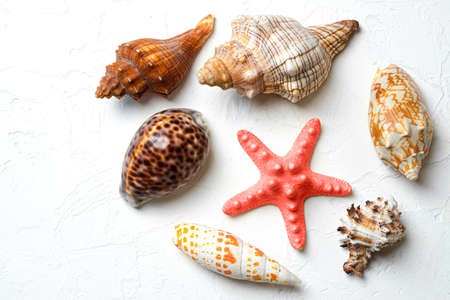 Different shells and red starfish on a white background. View from above. Macro.