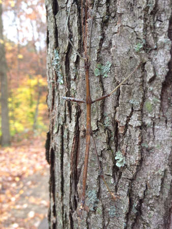 A stick bug doing its thing pretending to be a stick