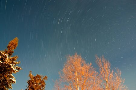 Trees and Star Trails