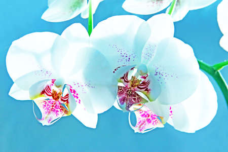 Orchid on blue photo