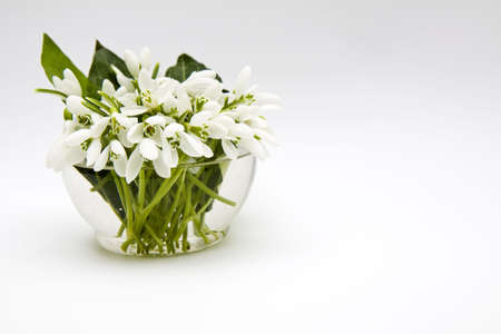 Snowdrops in a transparent vase, filled up with water. Stock Photo