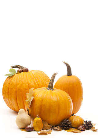 isolated orange pumpkins with chesnuts for halloween