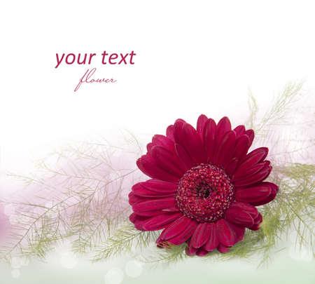 spring flower - beautiful pink gerbera Stock Photo