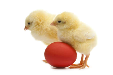 two easter chicken with painted egg