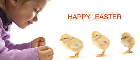 isolates easter chicken with an adorable girl photo