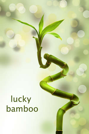 lucky bamboo with bokeh backround Stock Photo - 9529124