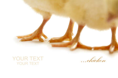 isolated close up chicken legs on whitw background photo