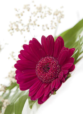 spring flower - pink color gerbera, Stock Photo - 12632508