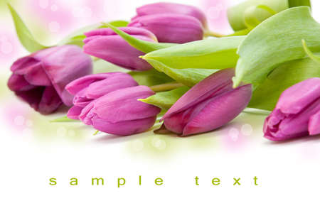 tulip bouqet in a white backgroungd - spring feeling Stock Photo - 12632536