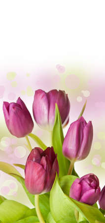 pink tulip bouqet - spring time Stock Photo - 12632537