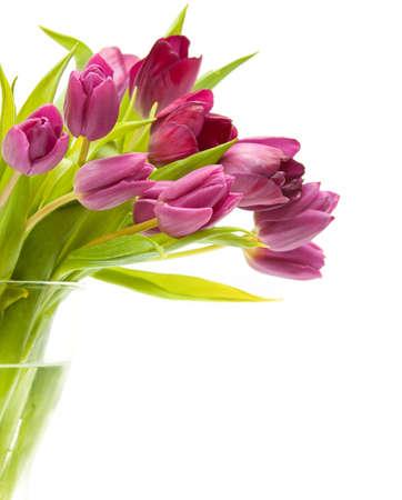 春天花 - 桃红色郁金香在水中
