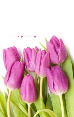 spring flower - purple tulip bouqet Stock Photo - 14065546