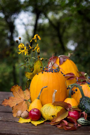 autumn decoration, with colored pumpkins Imagens