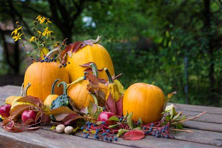 Pumpkins autumn colored decoration,aplle, nuts Imagens
