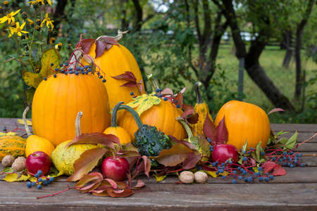 halloween, autumn colored pumpkins decoration