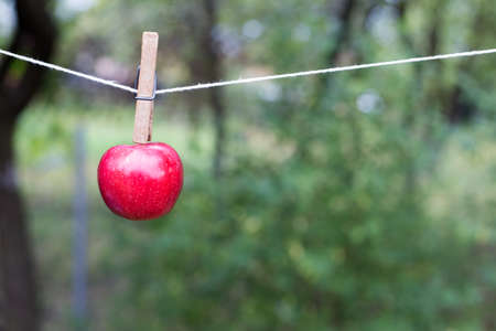 one red apple, clip, autumn