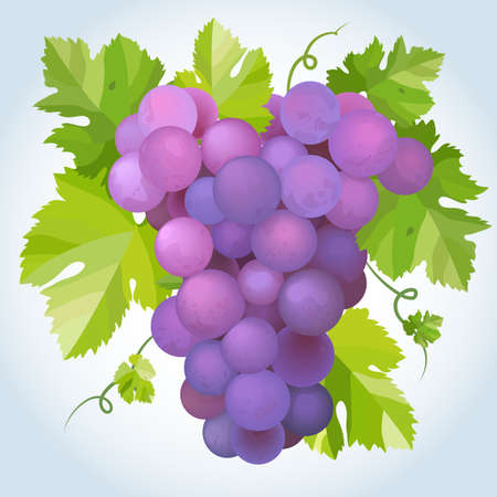purple grapes: Black grapes with green leaf.  Illustration