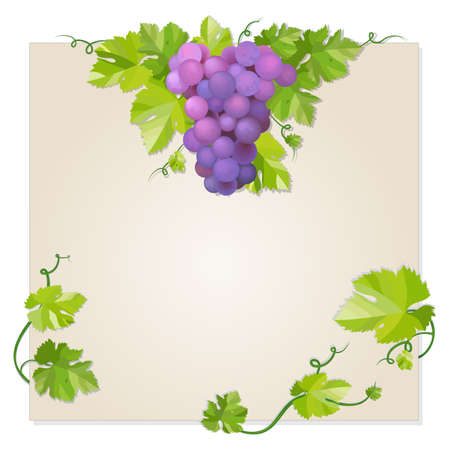 Black grapes with green leaf. EPS10 vector illustration Stock Vector - 12346585