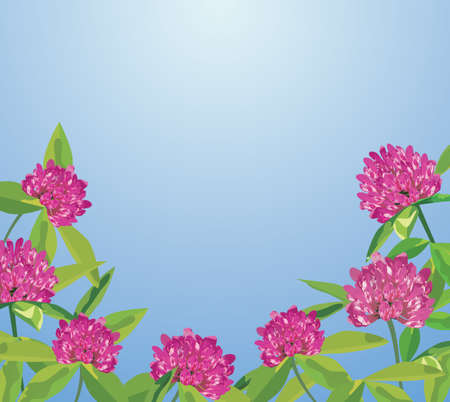 Background with clover flowers.  Vector