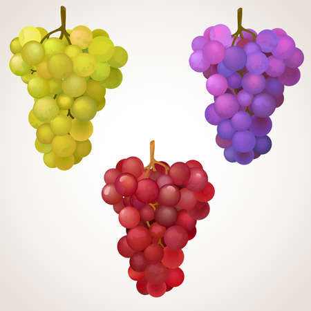 Black, red and green grapes. EPS10 vector illustration