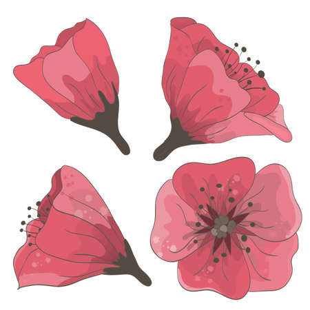 Set of hand drawn flowers isolated on white background  EPS 10 vector illustration  Vector
